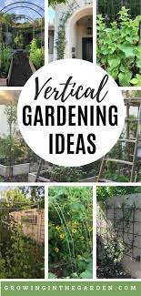 add vertical space to your garden