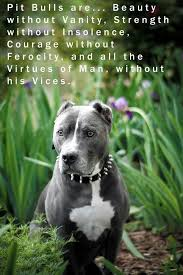 Pitbull Quotes 82 Awesome 24 Best Pitbull Quotes Pitbull Inspiration Images On Pinterest