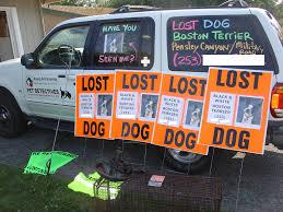Lost Pet Flyer Maker I Lost a Pet 75