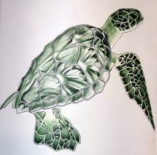 Small Picture 24 best Sea Turtles images on Pinterest Sea turtles Drawings
