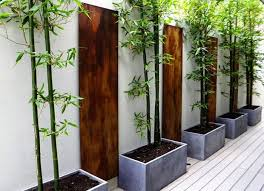 HOW TO GROW BAMBOO IN POTS