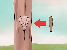 Down To Earth  Grafting Fruit Trees  YouTubeHow To Graph A Fruit Tree