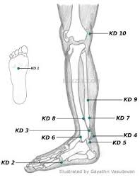 Leg Acupressure Points Chart Acupressure Points Chart Acupressure Points Chart