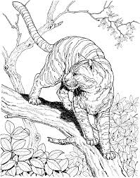 Small Picture Wildlife Colouring Pages FunyColoring