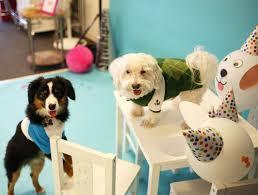office pet ideas. Evite Pet Party Dogs Office Ideas
