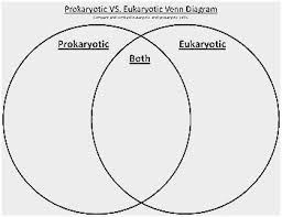 Prokaryotes Vs Eukaryotes Venn Diagram Worksheet Venn Diagram Comparing Prokaryotic And Eukaryotic Cells Pretty Venn