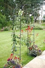 new garden rose arch climbing plants
