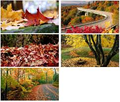 Windows Fall Theme Download Autumn Themes For Windows Download Pureinfotech