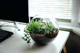 small plants for office. Plants For Office Desk Small India E