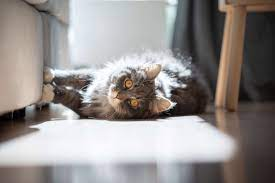 How To Stop Cats From Scratching Furniture Petstock Blog
