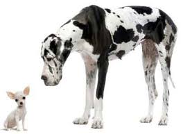 Dog Size Classification Chart Dog Groups By Size Only Dog Breeds