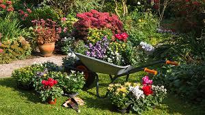 plants for planting in september pic rex shutterstock