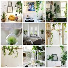 ... hanging,plants,decor