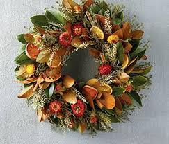 Amaryllis Bulbs Great Way To Give As Christmas Gifts  Get More Christmas Gift Plants
