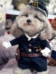 Ups Dog Costume Size Chart Cute Funny Dog Costumes Various Styles Products Pet