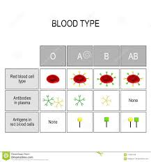 Types Of Blood A B Ab O Recipient And Donor Stock