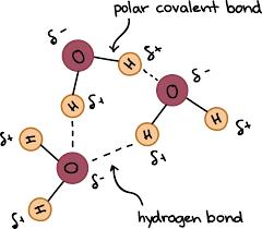 Hydrogen Bonding Hydrogen Bonds In Water Article Khan Academy