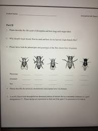 describe the life cycle of drosophila and how long com student drosophila lab report part ii 1 please describe the life cycle