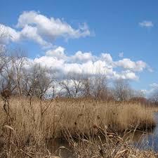 Free Images SnappyGoatcom bestofgrass grassy marsh tall grass