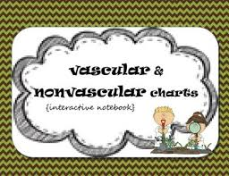 Plant Classification Chart Worksheets Teaching Resources Tpt