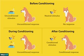 Example Of Classical Conditioning Classical Conditioning How It Works With Examples