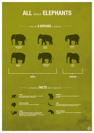 Elephant Species Fun Facts Infographic Chart Animalfunfacts