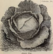 """Image from page 14 of """"Alfred Bridgeman seeds"""" (1900) 