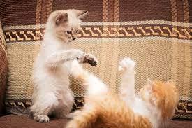 猫 も 杓子 も 意味