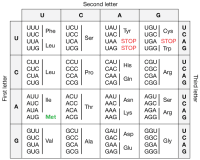 Universal Genetic Code Chart Universal Genetic Code Chart Answers Simulated Lab