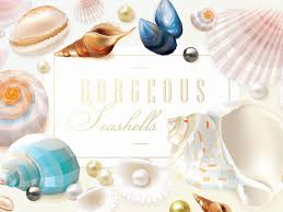 sea shells collection gorgeous seashells collection by diana hlevnjak dribbble dribbble
