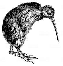 キウイ鳥アンティーク動物イラスト 19世紀のベクターアート素材や画像