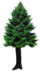 Christmas Tree Png Free Download Png Arts