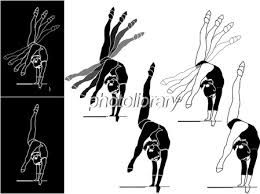 イラスト 体操 女子 イラスト素材 301922 フォトライブラリー
