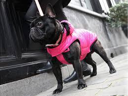 """Résultat de recherche d'images pour """"manteau chien"""""""