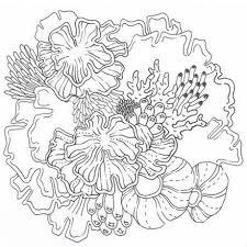 特別価格先着限定数ミニ色鉛筆セット付き海好きファミリーへのプレゼントに 塗り絵アートbookcolor