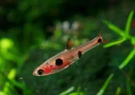 [ARTICLE] Quels poissons mettre dans un Nano-Aquarium  ? - Page 3 Images?q=tbn:ANd9GcTiKIqUK93c7DeAZVIcm-Fo5wLyod9vvcsNcPDZc-KzrAkjhb7v