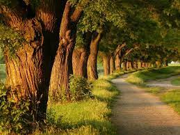 Beautiful Trees Wallpapers - Top Free ...