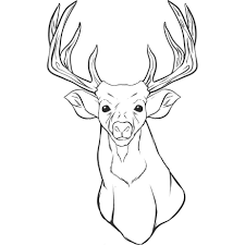 Small Picture Deer Face Drawing Coloring Coloring Pages