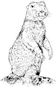 Prairie Dog Coloring Page Get Coloring Pages