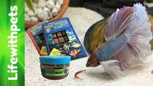 Feeding My Betta Fish