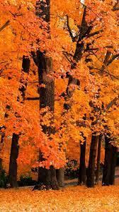 Cute fall wallpaper, Iphone wallpaper fall
