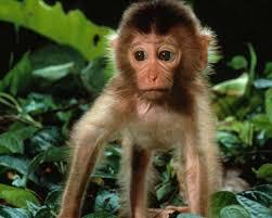 real jungle animals monkeys. Brilliant Animals Encyclopaedia  For Real Jungle Animals Monkeys A