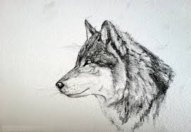 gray wolf face drawing. Plain Drawing Wolf Face Drawing With Gray