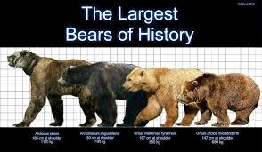 grolar bear size grolar bear size