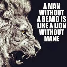 Beard Quotes Interesting A Lion Without A Mane Is A Lioness Stylish Men Pinterest