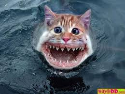 shark with cat face funny picture