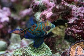 Image result for fair price of aquarium set up