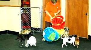 extra small dog house indoor dog house plans for small dogs extra large with regard to