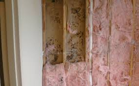 getting rid of black mould on walls