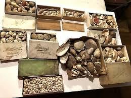 1860 90 Seashell Collection Sea Shells Cape Elizabeth Maine